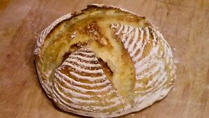 Campobello-Powdered-Sourdough-Starter