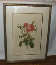 P. J. Redoute Rosa Centifolia Foliacea