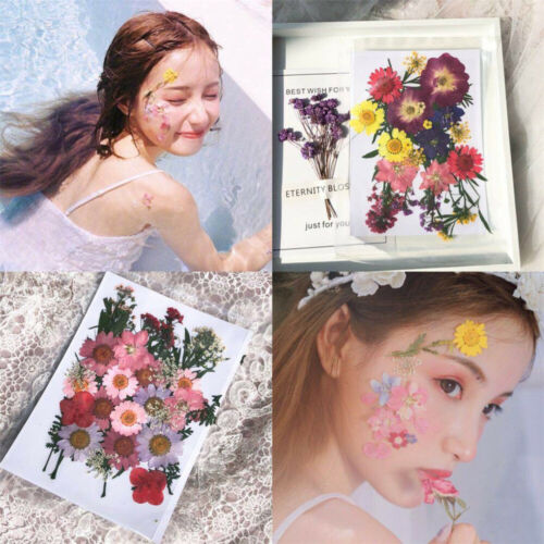 Pressed Flower Collections Organic Natural Dried Flowers DIY ART Floral Decors