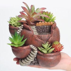 Piante Di Fiori.Vaso Di Fiori Succulente Bonsai Piante Grasse Decorazione Giardino