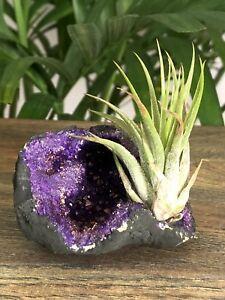 Purple-Geode-Air-Plant-Crystal-Tillandsia-Gemstone-Specimen-Dyed-Home-Decor