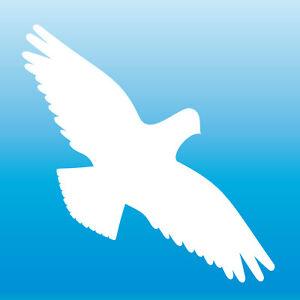 Warnvogel Aufkleber 20cm weiß Habicht Vogel Schreck Fenster Schutz Deko Folie