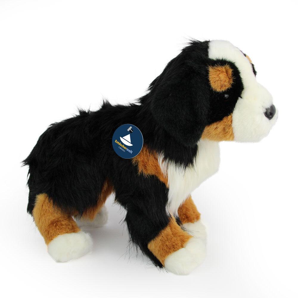 di del del Bernese Condizione farcito cane di farcitocaneanimale montagna 80wZNnOkXP
