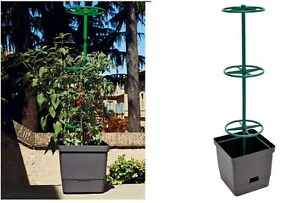 Vaso per piante rampicanti vaso per pomodori orto in for Piante pomodori in vaso