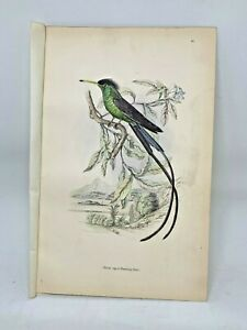 DELUXE-ED-Hand-colored-Plates-1840-Jardine-History-Hummingbirds-21-Black-Capped