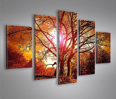 Suntree MF 5 Bilder 160x80 Bild auf Leinwand Wandbild Poster