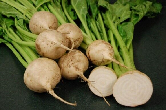 (150)'KINGS' QUALITY beet root avalanche f1 seeds - salad Vegetable