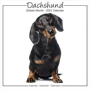 Dachshund-2021-Studio-Perro-Breed-Calendario-15-OFF-Multiple-Pedidos