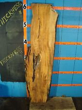 """#9116   1 3/8"""" THICK  spalted maple live edge slab"""