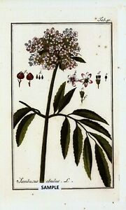 "Decorative Arts 6 Botanical Herbal Prints From "" Pictures Of Medicinal Herbs "" Published In 1798 Ample Supply And Prompt Delivery Other Antique Decorative Arts"