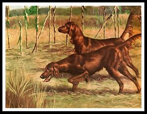 IRISH RED AND WHITE SETTER TWO DOGS LOVELY VINTAGE STYLE DOG PRINT POSTER