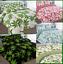 Beautiful Leaf WEED GANJA MARIJUANA Ellie Hemp Spring  Duvet Covers Set