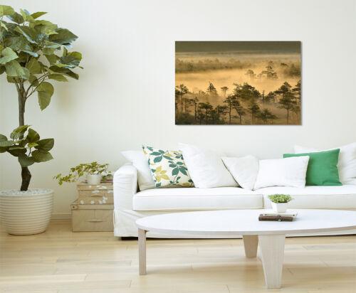 Wandbild Landschaftsfotografie Goldener Waldmorgen bei Sonnenaufgang Leinwand