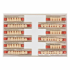 3 Sets 84pcs Acrylic Resin Denture False Tooth Dental Complete Fake Teeth A35
