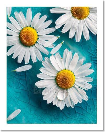 Daisies Floating In Water Art Print Home Decor Wall Art Poster C