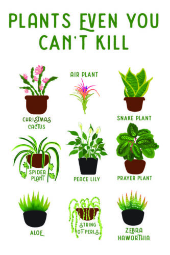 Plants Even You cant Kill Succulents Funny Poster 12x18 Inch