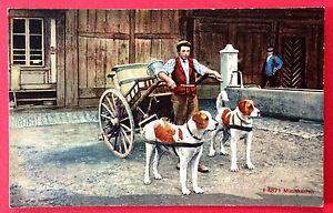 Ansichtskarten Treu Ak Schwez Um 1930 Typen Bernhardiner Milchkarren 10301