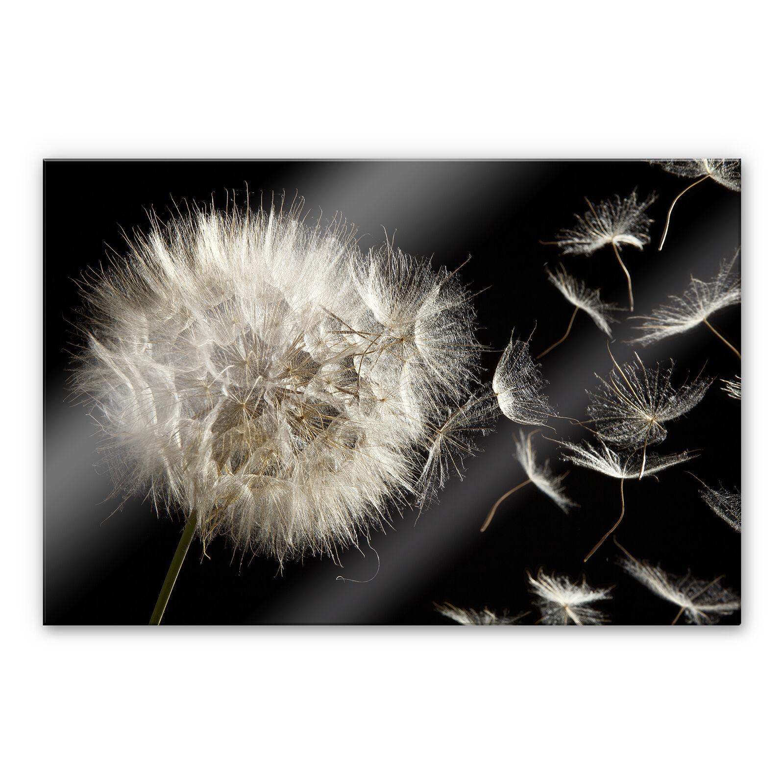 Acrylglas XXL Wandbild PusteBlaume schwarz weiß BILD hohe Farbechtheit WANDDEKO