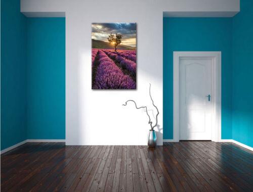 De Rêves Lavande Provence Avec Arbre Image de Toile Décoration Murale Impression