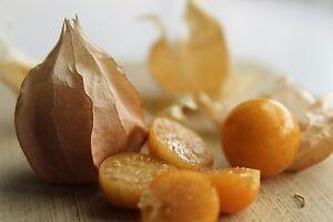 40-Semillas-Alquejenje-PHYSALIS-PERUVIANA-Seeds-Samen-Semi-Garden-Fruit