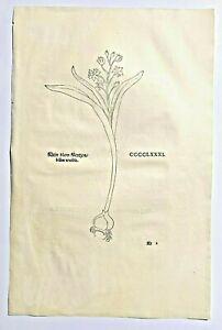 FUCHS 1543 Antique Woodcut Print - BLUE FLOWER Floral Botanical Herbal *RARE* 1