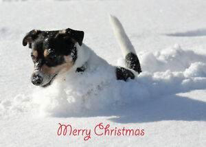 Christmas-Card-DOG-Unique-10-Pack-2-Styles-A6-Size-NEW-Jack-Russell-Collie