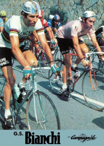 Eddy Merckx Gimondi A4 poster  Campagnolo Super Record Colnago Master Bianchi