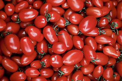 TOMATO CHERRY ROMA - 100 FINEST SEEDS