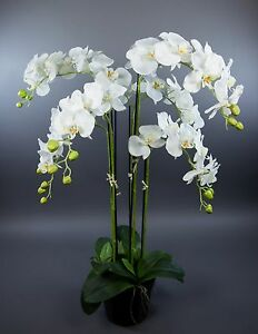 orchidee 90x60cm wei ga kunstpflanzen k nstliche blumen. Black Bedroom Furniture Sets. Home Design Ideas