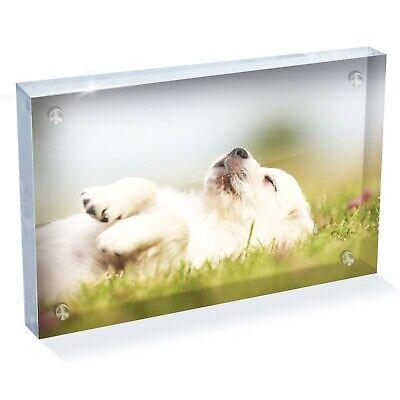 DOG ART PRINT Cozy Moments by Kevin Daniel Lab Labrador Cute Puppy Poster 11x14
