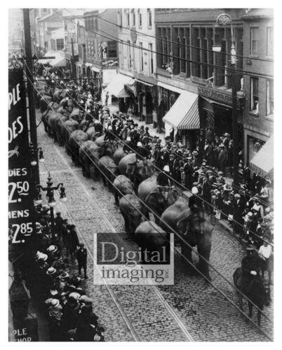 Salem MA late 1800s Elephant Parade