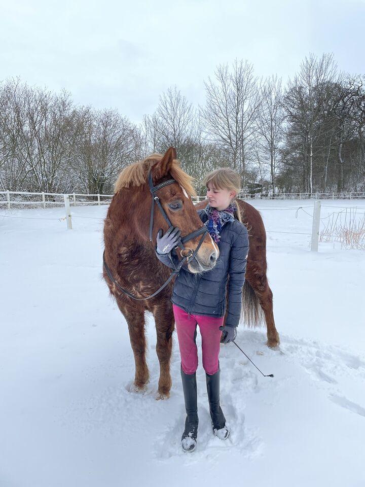 Salg af pony