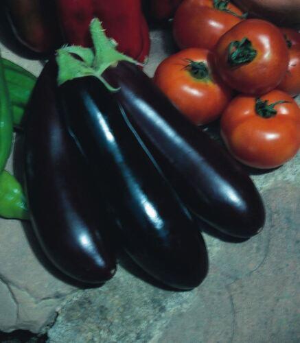 750 Seeds Vegetable Aubergine Long Purple