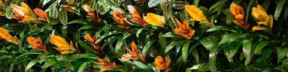 oasisplants
