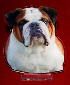 statuette-photosculptee-10x15-cm-chien-bouledogue-anglais-6a-dog-hund-perro-cane