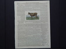 The Cultivator & Country Gentleman, in-text illustration #20 Jersey Cow