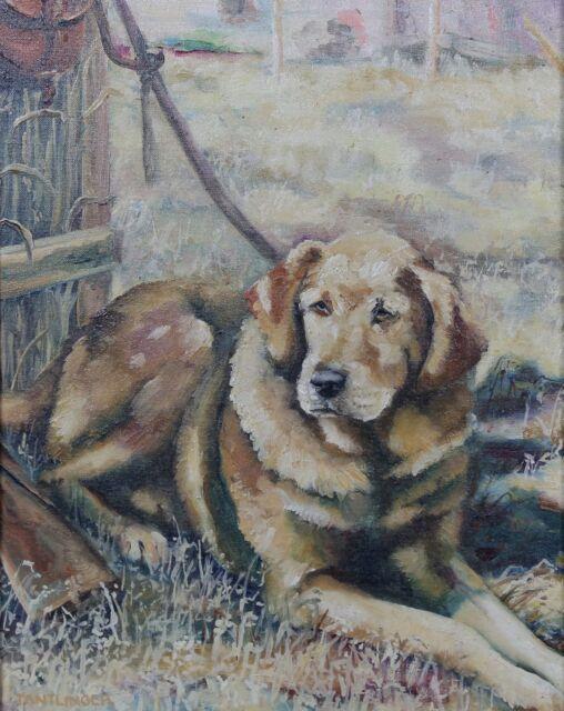 Susan Tantlinger (Xx) Golden Labrador Sauzon (Belle-île) Dodge City Kansas