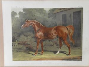 1876 Antique Cassell's Book of the HORSE Chromo Victorian Print ECLIPSE