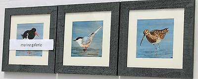 Décoration oiseaux de mer 3 cadres Bretagne déco marine sterne breton série N° 2