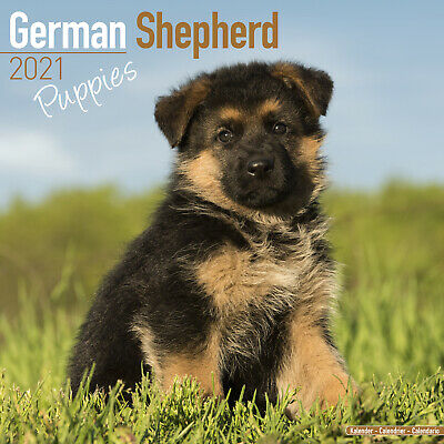 Puppies 2021 Puppy Calendar 15/% OFF MULTI ORDERS! German Shepherd