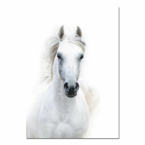 Wall Art Canvas Posters And Prints Animal White Horse Pictures Modern Home Decor