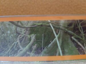 14 35 National Geographic 3 D Rain Forest Backdrop Reptile
