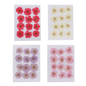 12pcs Pressed Dried Flower Dry Wintersweet For Resin Jewelry Craft DIY Cards