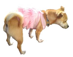 Pink Dog Tutu Dress Puppy Cat Pet Clothes Costume Bow Skirt Princess Outfit Uk Ebay
