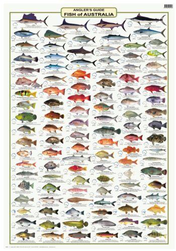 CAMTAS WALL CHART Australian Fish Identification Anglers Guide LAMINATED
