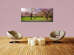 Leinwandbild Sakura Blumen blühen Panoramabild Kunstdrucke M0555