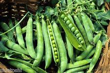 50 -Seeds-PEA- SVS-815, Vegetables- HYBRID -Veg - F1-Vegetables seeds