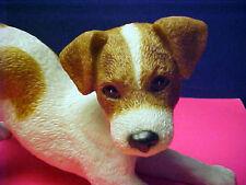 Jack Russell Terrier Puppy 2001 Lenox [lying] etc