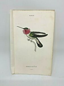 1st-Ed-Hand-colored-Jardine-039-s-Natural-History-1834-Tricolor-Hummingbird-13