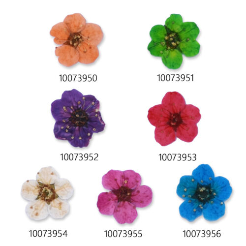 20pcs Mini flowers Pressed Flowers for crafts dyed flowers for iPhone art
